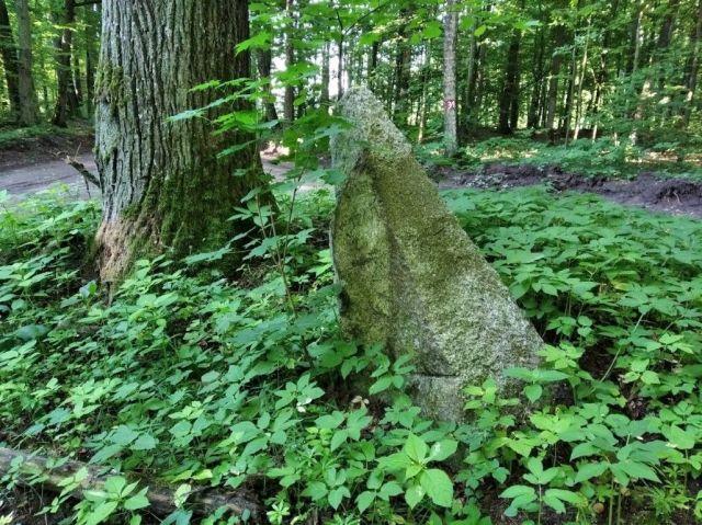 Kamień drogowy, leśnictwo Tylice (gm. Nowe Miasto)
